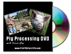 small-pig-processing-dvd2